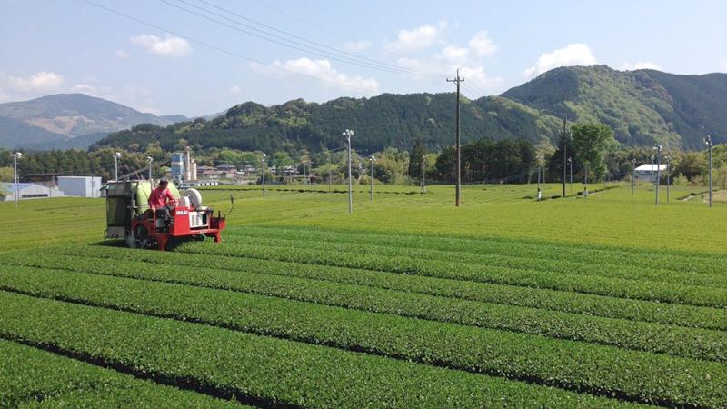 お茶農家の仕事