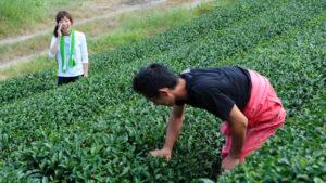 お茶農家の嫁