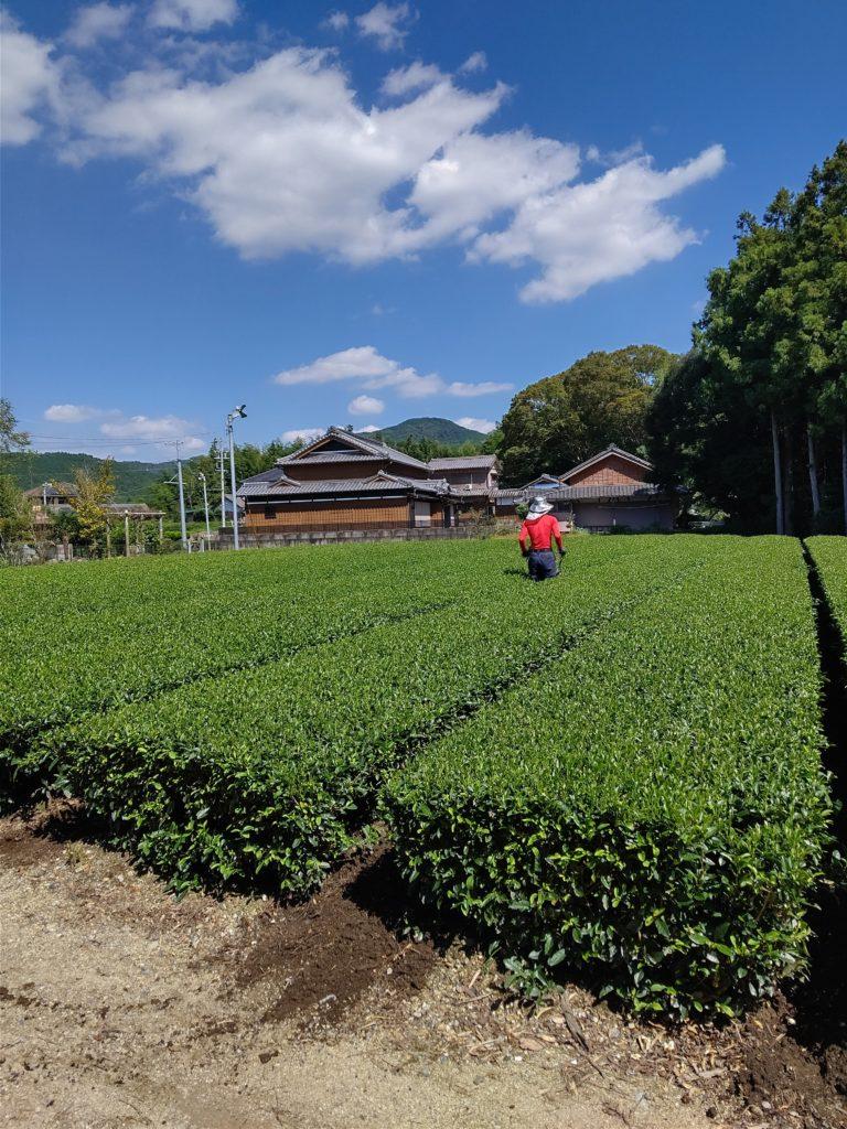 秋の空と茶畑